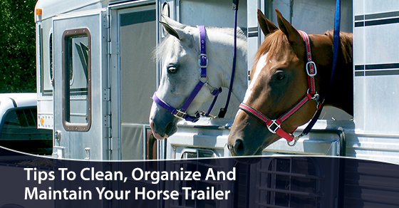 Tips To Clean, Organize And Maintain Your Horse Trailer